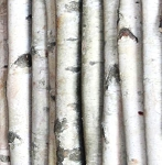 Birch Perches by the Inch
